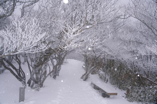 そうだ、雪山に行こう!